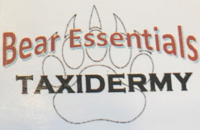 Bear Essentials Taxidermy